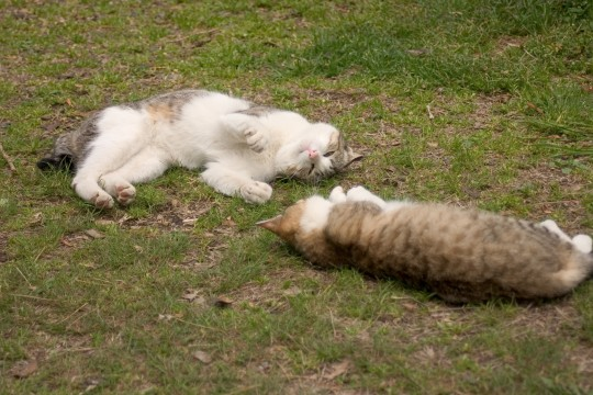 ネコが2匹