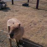 ソレイユの丘(神奈川県横須賀市)、公園&牧場&遊園地が融合♪