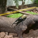 としまえん|昆虫館でカブトムシとクワガタと触れ合い大興奮