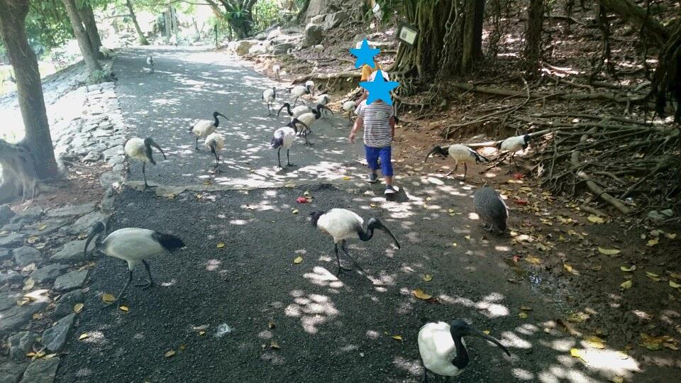 付いて来る鳥達