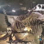 恐竜の化石がいっぱい|国立科学博物館(東京都上野)は常設展だけでも十分