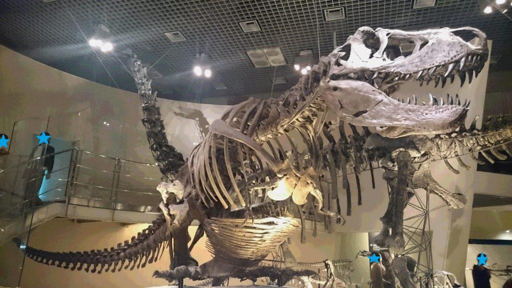 上野 恐竜
